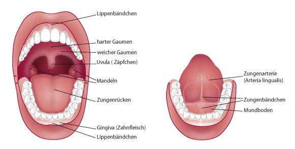 Lippen-/Zungenbändchen - Zahnarzt Luxemburg, Dr. Dr. Jakobs